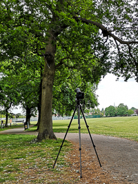 The camera and tree in the park M 125719