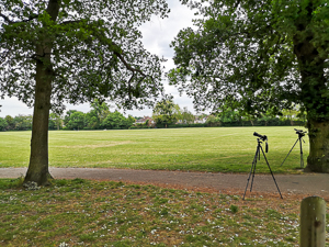 The camera video and tree in the park